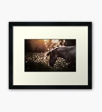 Summertime, ...And the cotton is high,,, Framed Print