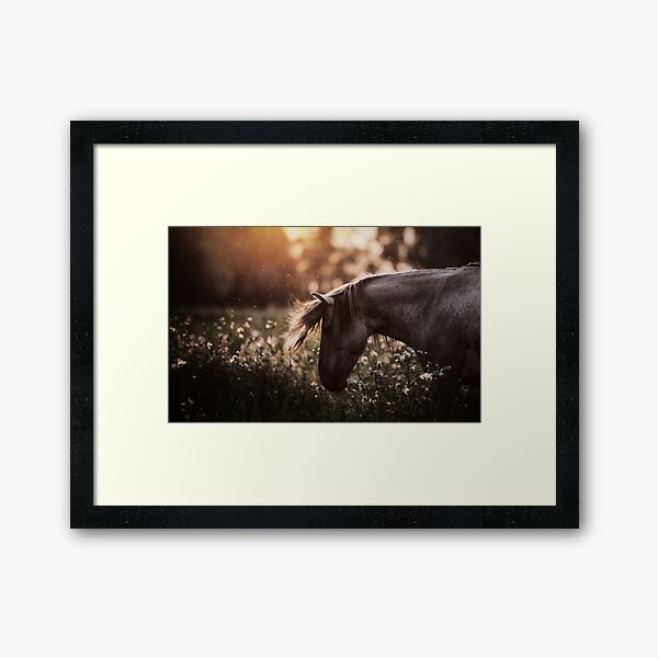 Summertime, ...And the cotton is high,,, Framed Art Print