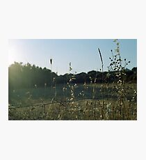 Summer Meadow Photographic Print