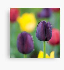 Dark-violet Tulips Flower Canvas Print