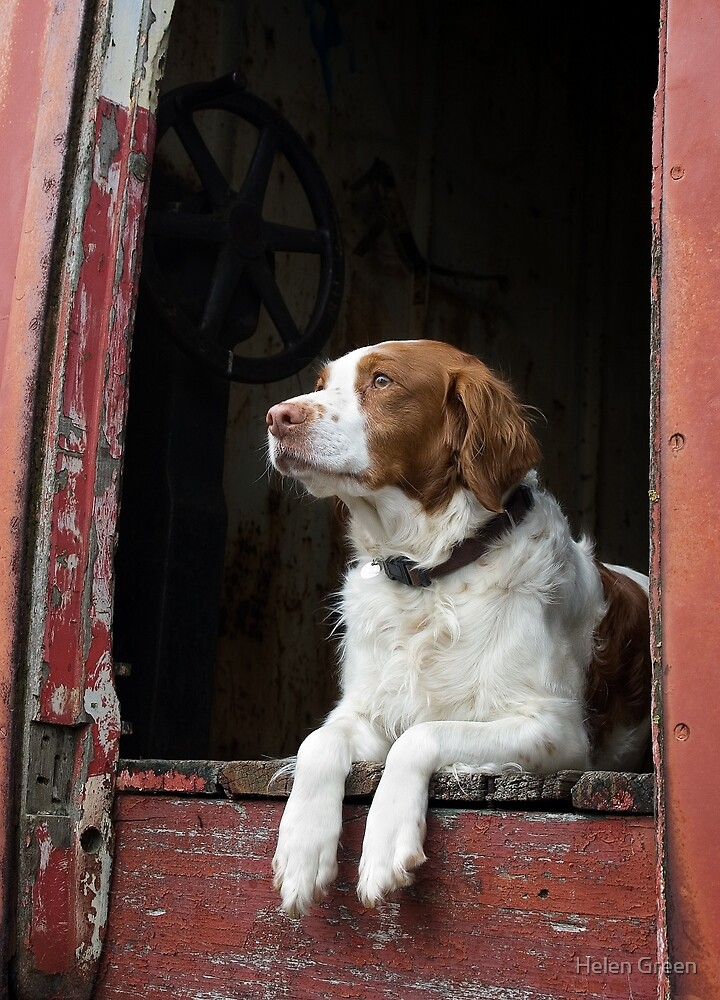 Waiting For The Hunt by Dog Shop