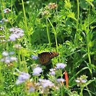 Butterfly among the Flora by Catherine Kerr