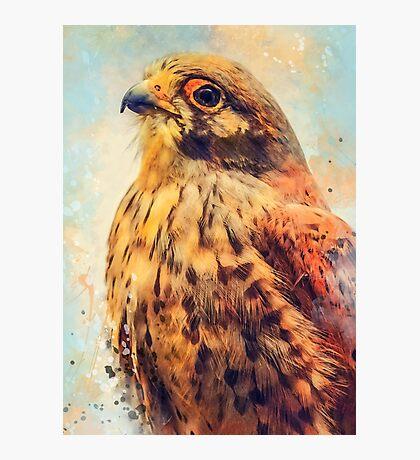 kestrel art #kestrel #animals Photographic Print