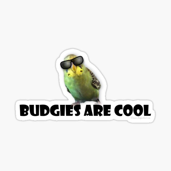 Budgies Are Cool Sticker
