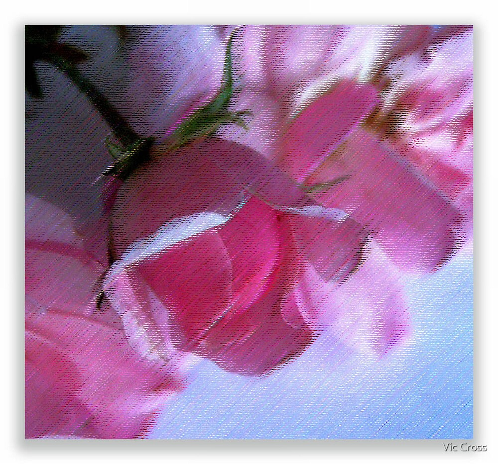 Pastel roses by Vic Cross