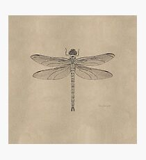 Fossil Dragonfly in stone Photographic Print