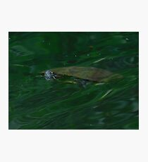 Swimming turtle Photographic Print