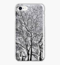 The Trees - As Old As Time iPhone Case/Skin