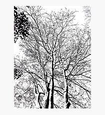 The Trees - Black & White Photographic Print