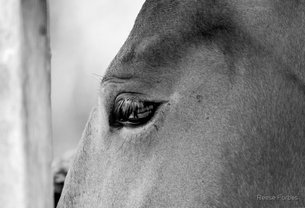 CONTEMPLATIVE HORSE by Reese Forbes