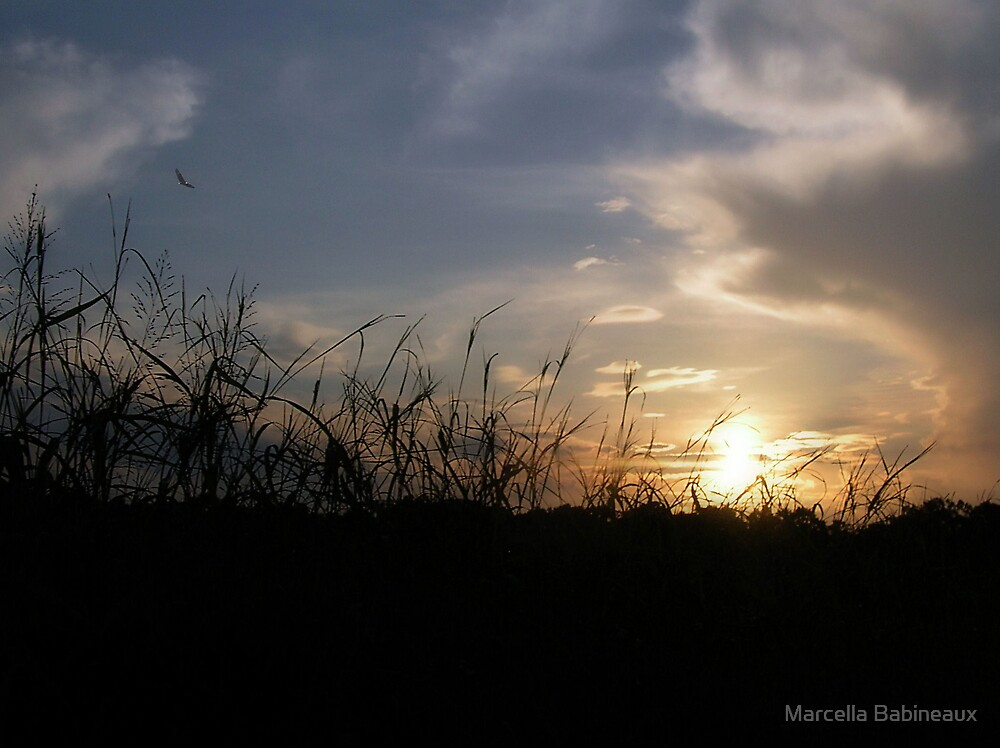 Summer Sunset by Marcella Babineaux