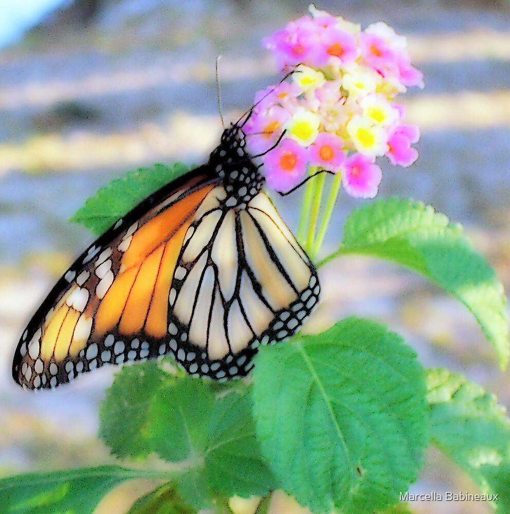 Monarch by Marcella Babineaux