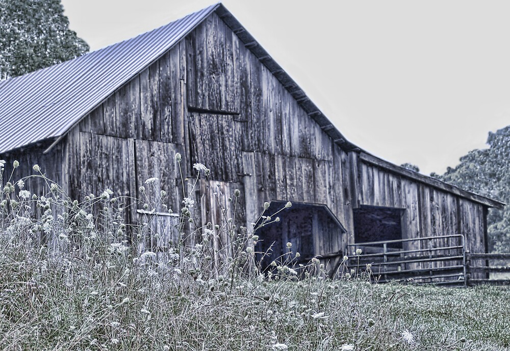 Barn and Lace by denise romano