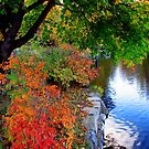 Autumn by the Pond by Brian Carey