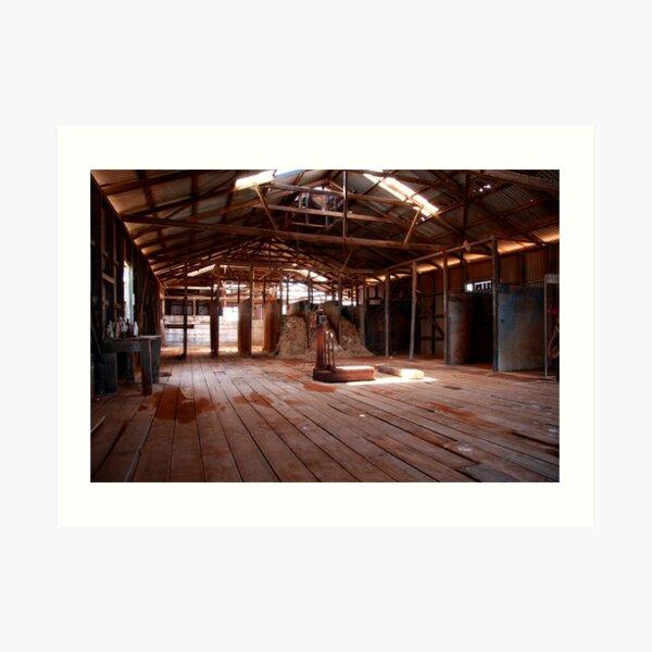Old shearing shed Art Print