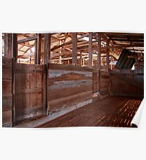 Shearing shed - holding pen Poster