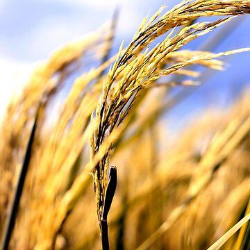 Rice grain by junpinzon