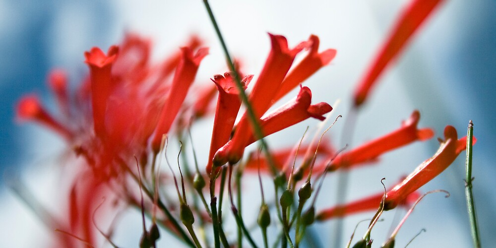 Scarlet Exhalation by Rachmat Lianda