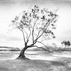 The Lone Tree by Linda Cutche