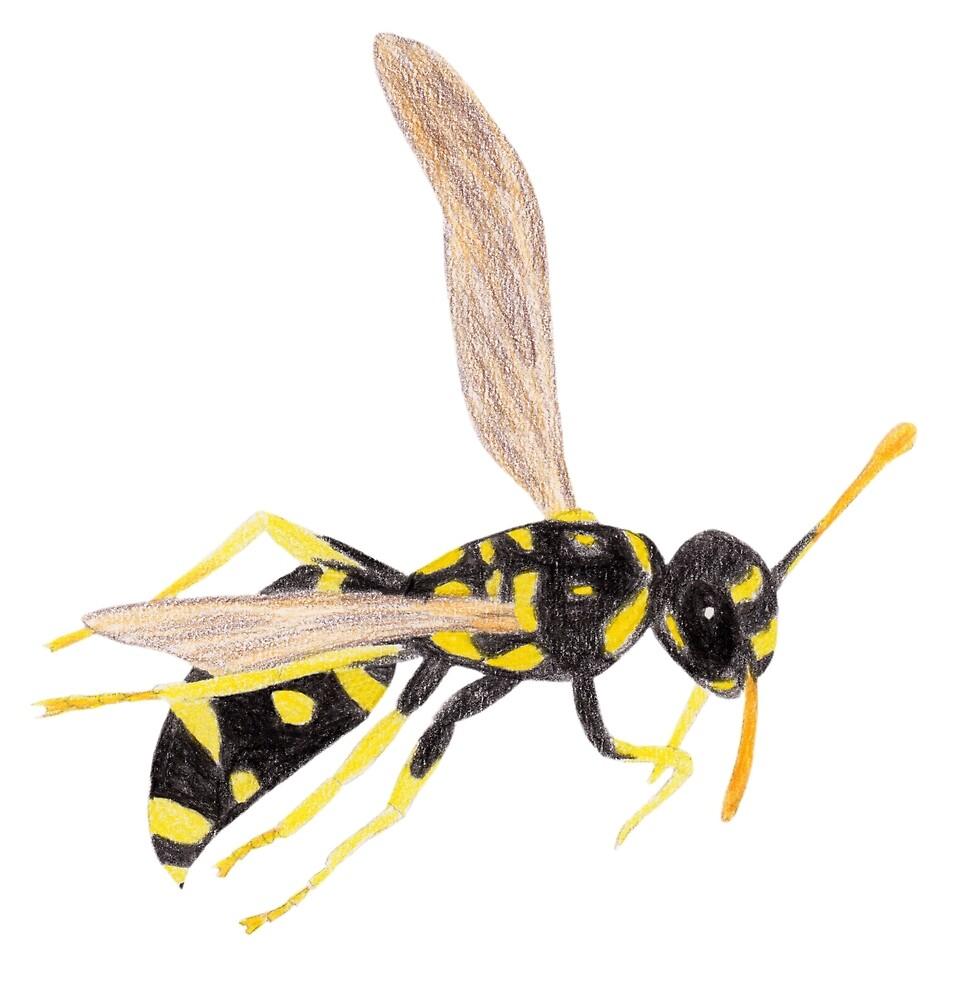Wasp by Linda Ursin