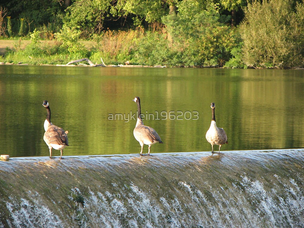 Three Geese on a Waterfall by amyklein196203