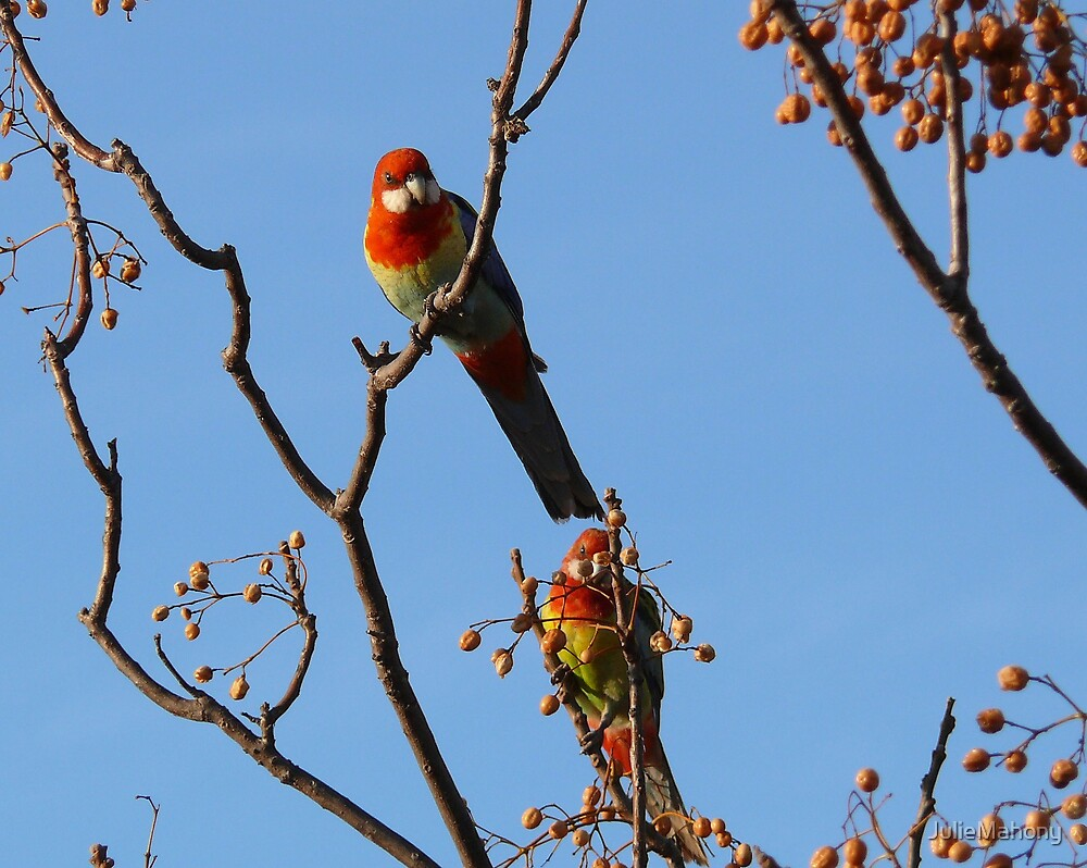 A Pair of Parrots by JulieMahony