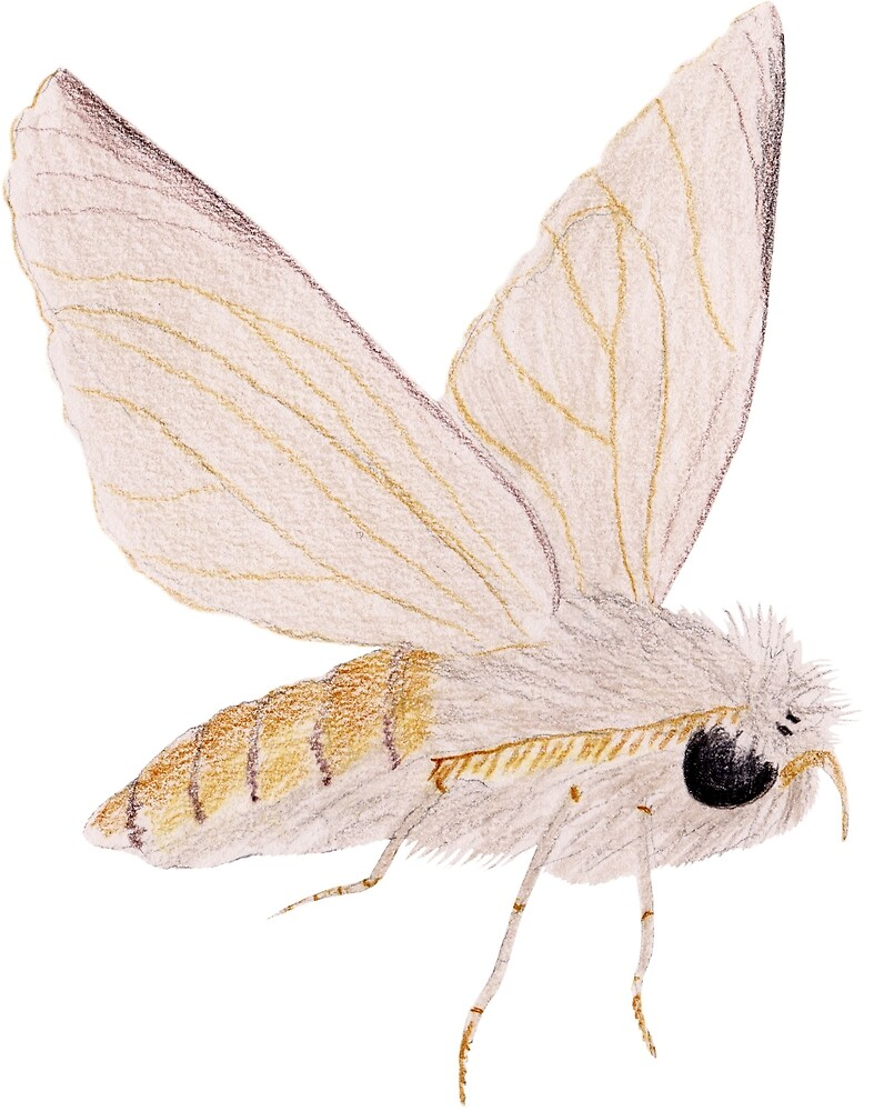 Silk Moth by Linda Ursin
