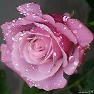 Purple Rose by saseoche