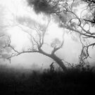 Trees in the Mist by Geoff Smith