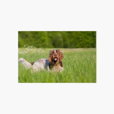 Are you joining me for a walk Spinone Art Board Print