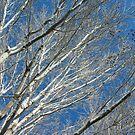 California Winter by valerieparent