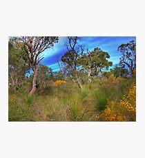 Colourful Bush Photographic Print