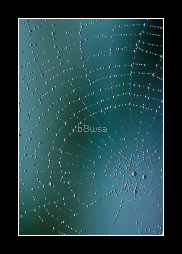 Spider's Web by b8wsa