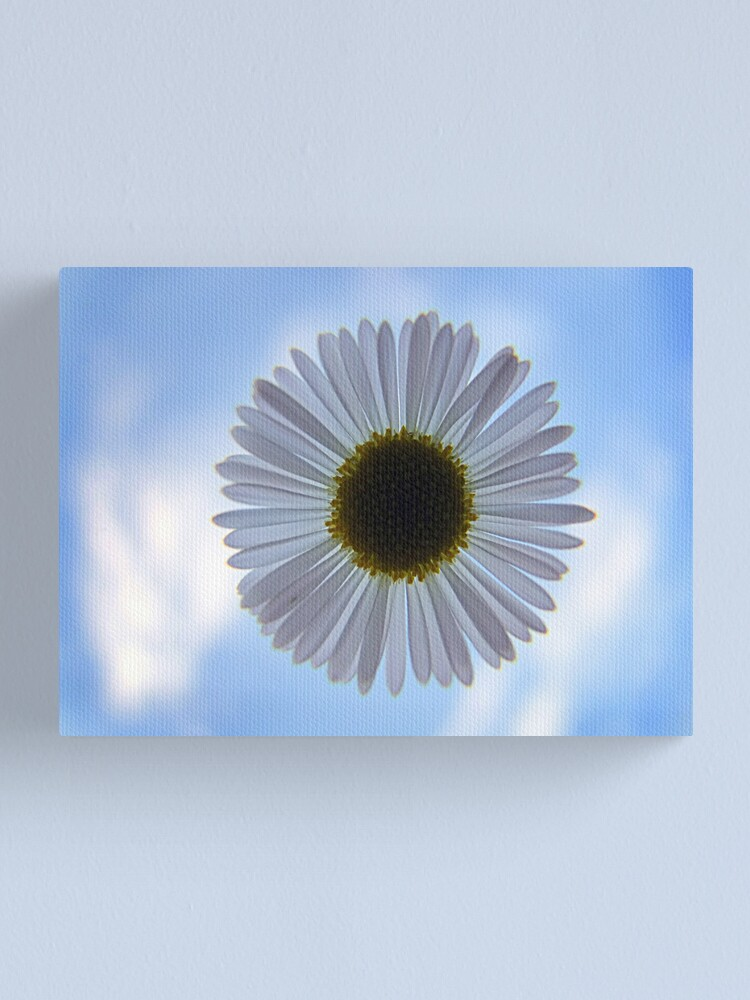 Alternate view of Daisy in the Sky Canvas Print