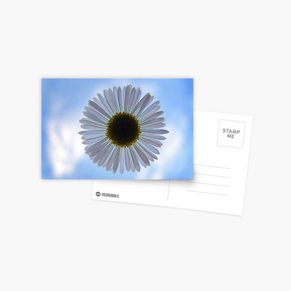 Daisy in the Sky Postcard