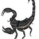 Black Scorpion by Linda Ursin