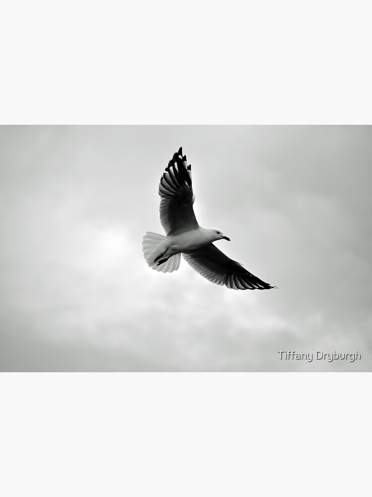 Soaring by Tiffany