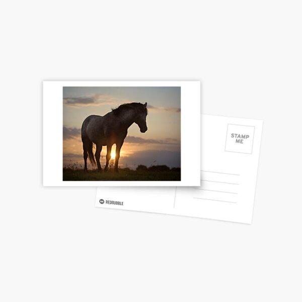Sunset Delight Postcard