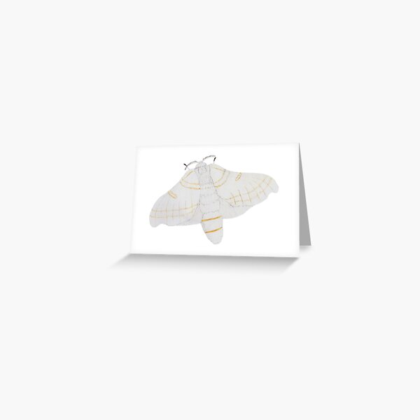 Silk moth from above Greeting Card