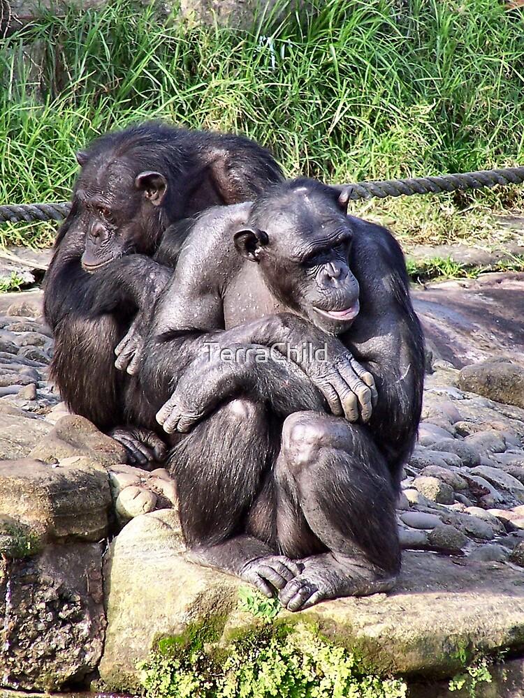 Chimps by TerraChild