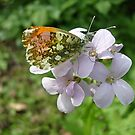 Butterfly and flower by Ana Belaj