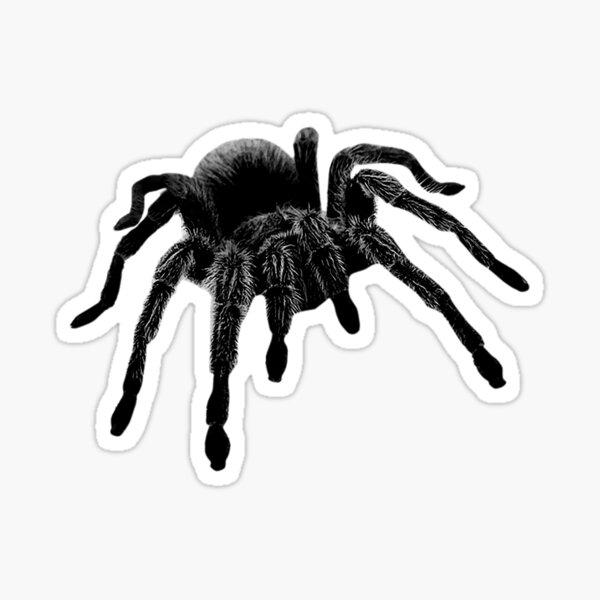 Tarantula Sticker