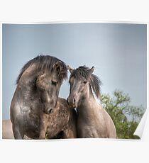 Konik Horses Poster
