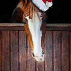 Horse with Santa hat by marusya1