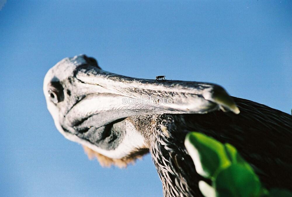 FLY BIRD by soulphoto