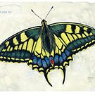 Swallowtail butterfly by alexandradawe