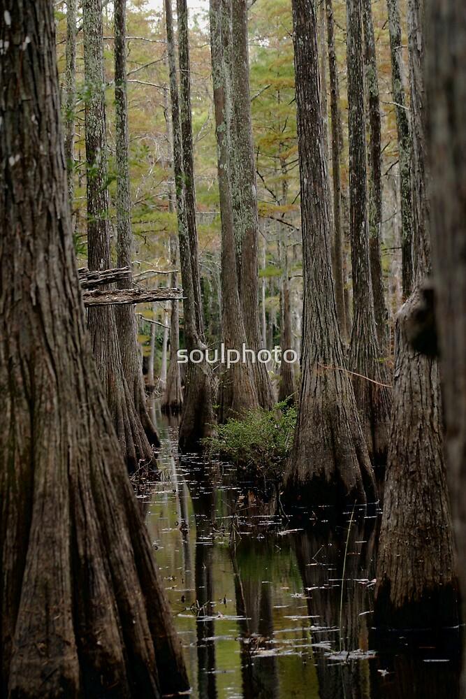 Stump Creak by soulphoto