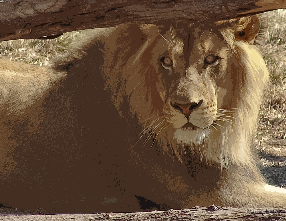 Stylized photo of an adult male african lion. by NaturaLight