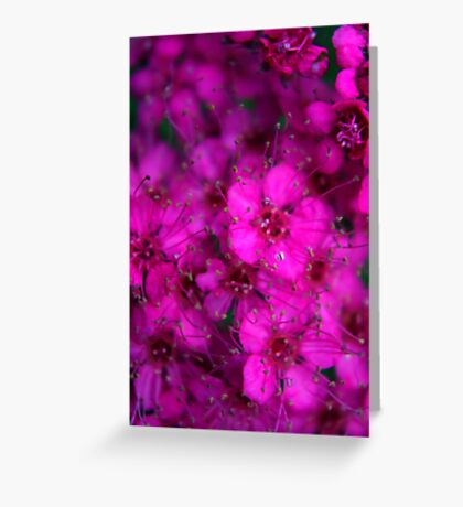 Pink All Over Greeting Card