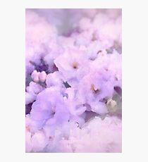 Fleur III Photographic Print